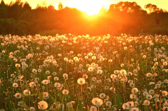 Sunset meadow twin flames energy