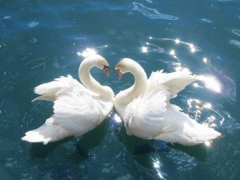 "Weekly Twin Flame Energy Forecast 11th-17th January: ""Love as Freedom"""