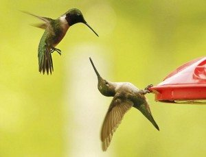 hummingbirds spirit