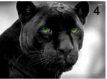 twin-flame-panther